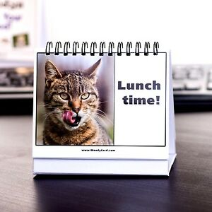 Kitty Moodycards Cat Pictures Cards Decor Table Desk Pet Funny Relax Boss Gift