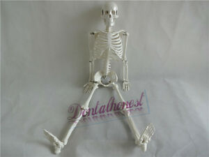 Best 85cm Human Anatomical Anatomy Skeleton Medical Model stand Fexible New