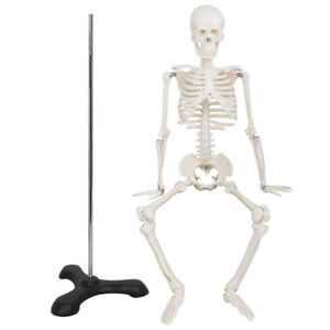 Mini Size Medical Anatomical Human Skeleton Model With Rolling Stand 85cm 33 5