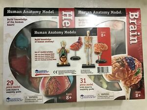 Human Anatomy Model Brain Heart Body Skeleton Set Of 4 Models