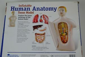 New Inflatable Life Size Human Adult Torso Anatomical Anatomy Teaching Model