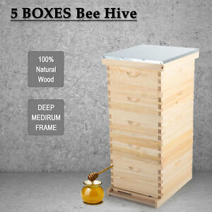 5 Brood Box For10 frame Beehive bee Hive Frame For Beekeeping W Metal Roof