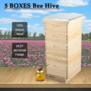 5 Brood Boxes10 frame Hive Frame bee Hive Frame beehive Frames W Metal Roof