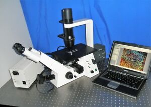 Zeiss Axiovert 40 Cfl Inverted Fluorescence Phase Microscope