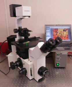 Olympus Ix70 Inverted Fluorescence Phase Contrast Microscope 18mp Live Cell Imag