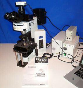 Olympus Bx61 Wi Fluorescence Dic Water Immersion Microscope