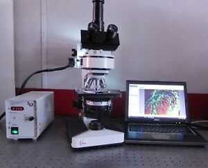 Leica Leitz Laborlux S Fluorescence Phase Contrast Microscope