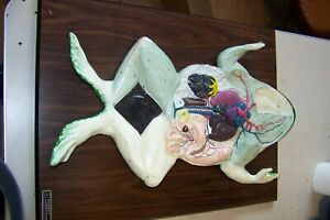 Vintage Anatomical Model Bobbitt Frog Cheapest On Ebay Reduced Price