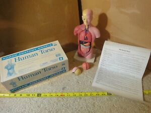 Human Anatomy Torso Model By Educational Insights Teaching Model W Worksheets