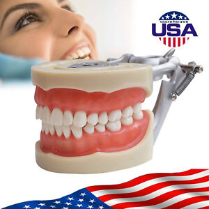 U Soft Gum Dental Universal Plate 200h Natural Adult Removable Teeth Tooth Model