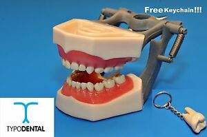 Typodont Dental Pediatric Model 760 Works With Columbia Brand Teeth