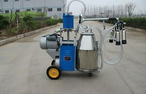 Automatic Milking Machine Milking For Cows
