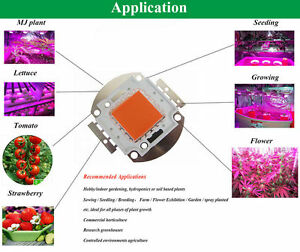10w 20w 30w 50w 100w Cob Full Spectrum Led Chip 380nm 840nm Plant Grow Light