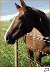 Bayco Finish Line Durable Horse Fence 2800 Foot Roll Black