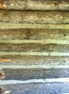 Log Cabin Antique Old Original Rustic Historic