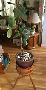 Vintage Primitive American Wood 2 Bands Round Bucket 3 Leg Plant Stand 23 T