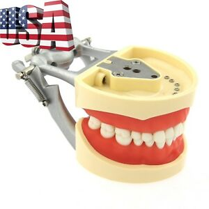 Us Dental Typodont Teeth Model With Removable Tooth Fit Kilgore Nissin 200 8012