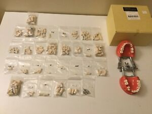 159 Uncut Kilgore Model Plastic Teeth And Typodont Dental Practice Nissin