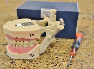Frasaco Dental Typodont Study Model Ana 4 28 Tooth Lab Practice School Sim 2