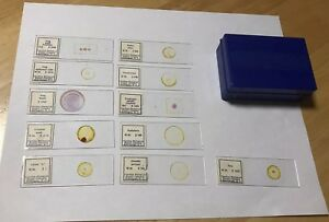 Blue Plastic Microscope Slide Box W 11 Samples Carolina Biological Supply Co