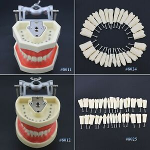 Dental Practice Typodont Teeth Model Removable Teeth 28 32pcs Kilgore Nissin 200