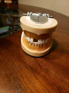Dental Typodont Dentoform Model 200 Removable Teeth Kilgore Nissin With Cheeks