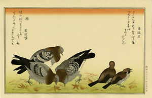 Large Utamaro Japanese Woodblock Print Tree Sparrow And Pigeon