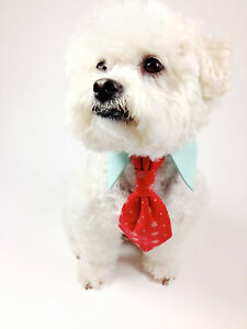 Dog And Cat Pet Clothes Website 1 Ebay Business Seller Fully Stocked