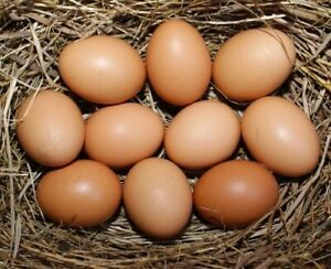 16 Barnyard Chicken Fertile Hatching Eggs New Hampshire Red And Plymouth Rock