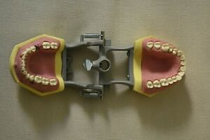 Columbia Km e 310 Articulated Periodontal Extraction Typodont Gingival Model