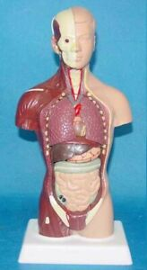 Human Torso Body Procedures For Installing Medical Training New In Box