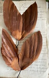 Fantastic Special Sale 2 Vintage Antique Brown Feather Wings Millinery Trim $10.00
