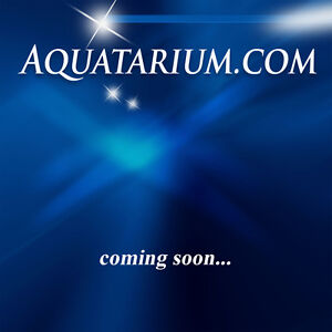 Aquatarium com Web Internet Premium Domain Name Scuba Aquarium Boat Fishing