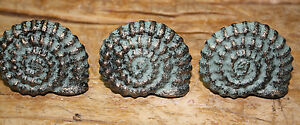 12 Cast Iron Nautical Sea Shell Style Drawer Pull Barn Handle Door Handles Beach