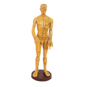 Plastic Standard Acupuncture Model Acupoint With Stand male 50cm Tall 2