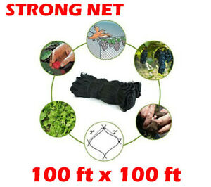 Extra Large 100ft X100ft Anti Bird Poultry Farm Game Fish Netting 2 Mesh Hole