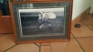 Vintage Picture Of Galloping Horse In Wooden Frame