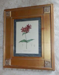 Large Uttermost Co Gold Wood Picture Frame W Botanical Print Lychnis Fulgens