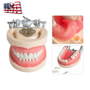 High Quality Dental Universal Plate Type Removable Teeth Study Tooth Model