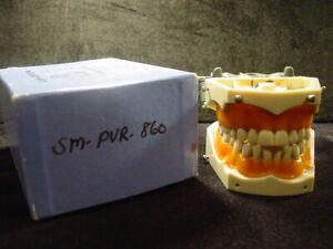 Columbia Dentoform Sm pvr 860 Soft Gingiva Typodont Model With Universal Adapter