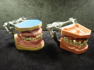 Two Columbia Dentoform Gingiva Typodont Dental Models With Adapters