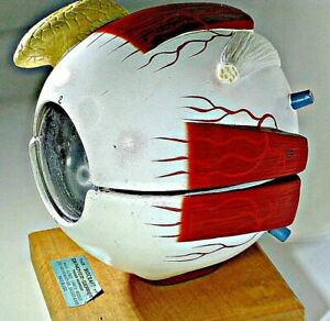 Biocraft Denoyer geppert Giant Five part Human Eye Model Vintage Anatomical