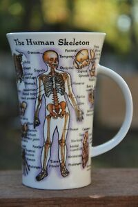 Dunoon Mug Skull The Human Body Jane Goodwin England Perfect For Students