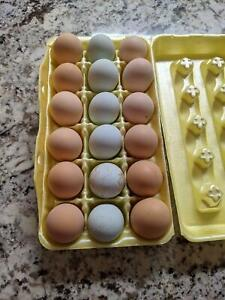 11 1 Mix Fertile Unwashed Eggs For Hatching Incubator