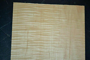 Curly Maple Raw Wood Veneer Sheet 6 5 X 19 Inches 1 42nd 4681 38