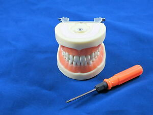 Typodont Dental Type Nissin Model Om 212 With Metal Articulator not Plastic