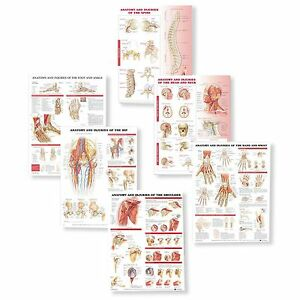Anatomy And Injuries Anatomy Chart Set Laminated