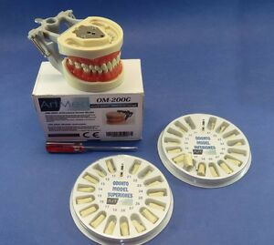 Typodont 200g Type Nissin Universal Plate Kit Replacement Teeth Upper Lower