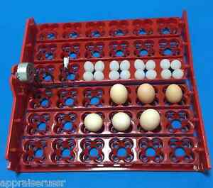 Automatic 144 36 Quail Egg Turner Tray With Motor 1 240 Revolution