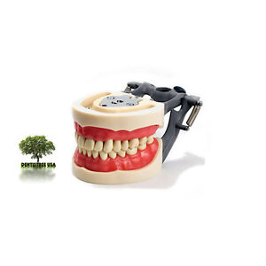 Dental Typodont Model 200 Works W Kilgore Nissin Brand Teeth 5 Bonus Molars
